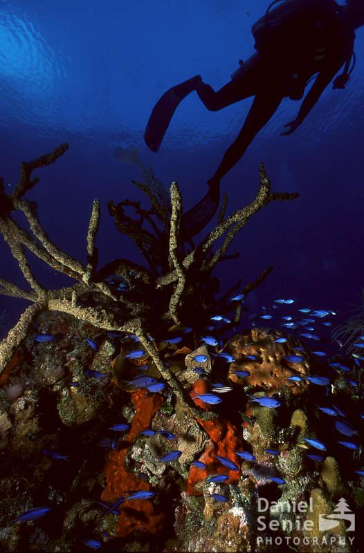 Coral, Diver, Fish