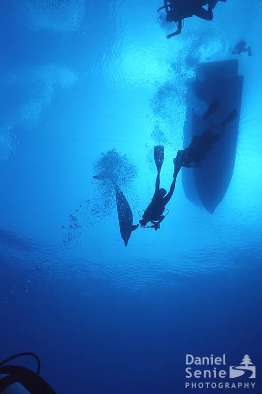 dolphin-silouette.jpg